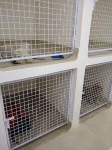 CLINICA veterinaria ADU constructores (8)